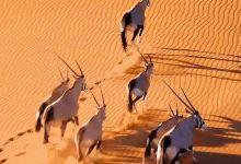 7日迪拜+阿布扎比 · 驾驶轻型飞机+高山溜索