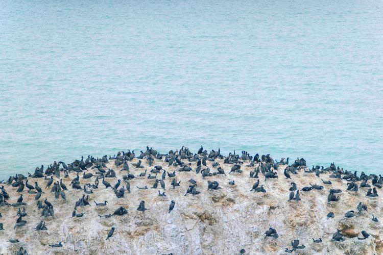 청해호새섬