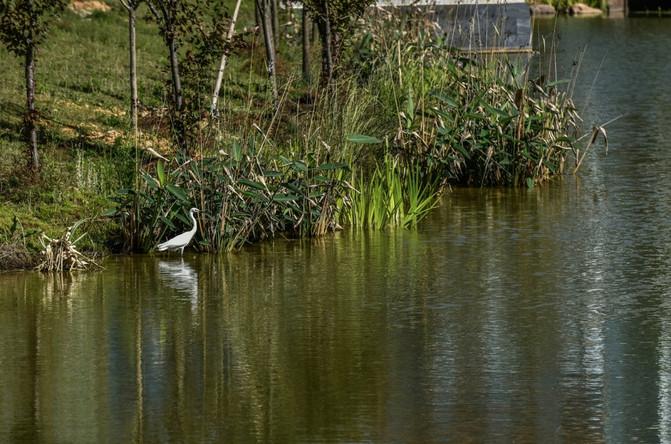 从荒郊野岭到城市公园,一处经开区休闲地,无心插柳却成小西湖 – 宁国游记攻略插图8