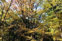 林试森公园