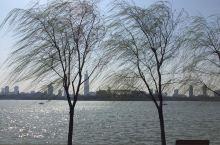 玄武湖春色