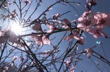 忽如一夜春风来 ,千树万树梨花开