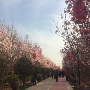 唐韵樱花园旅游景点攻略图