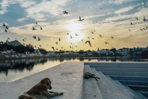 Pushkar,Recommendations