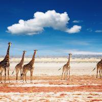 埃托沙国家公园图片