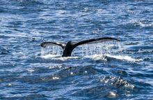 德雷克海峡偶遇座头鲸