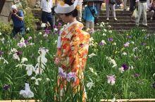 鸢尾花缤纷的季节