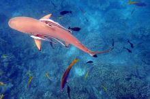 潜入海底的沙丘―鲨鱼城 Shark City
