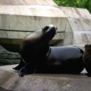 慕尼黑动物园旅游景点攻略图