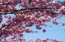 #春日寻芳#谷雨节气留住最后的春光