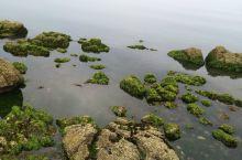 养马岛、威海、荣成、青岛自驾观海之旅
