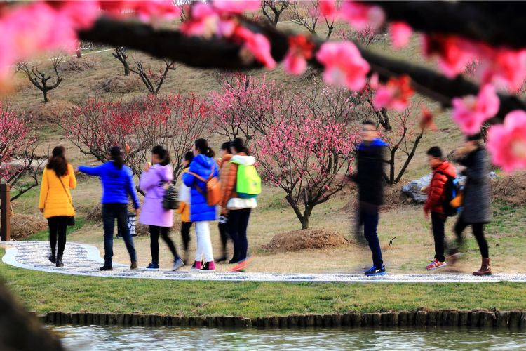 Meihuawan Scenic Spot2