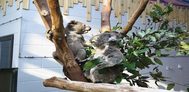 Hongshan Forest Zoo2