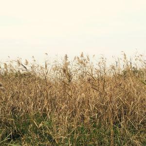 渔舟湾湿地公园旅游景点攻略图