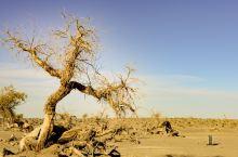 #瓜分10000元#众将士不死的灵魂.内蒙古怪树林