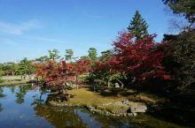 #金秋红叶#咱们俩的旅行--奈良