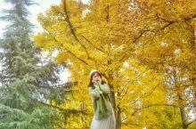 秋日最in穿搭【网红慵懒风毛衣+白纱裙】秋天也要做个美美哒的小仙女。 拍银杏的话,穿白色或者红色都好