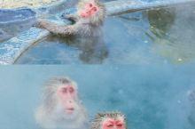 🇯🇵北海道旅行|♨️原来函馆就可以看猴子泡温泉