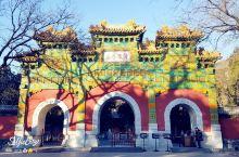 《北京植物园卧佛寺冬日嬉戏的锦鲤》  前几天去植物园转了转,虽然经常来,到没去过卧佛寺,夏天时下雨