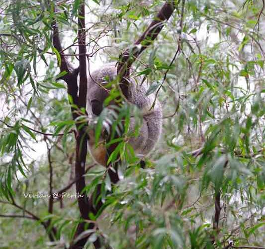 Perth Zoo3