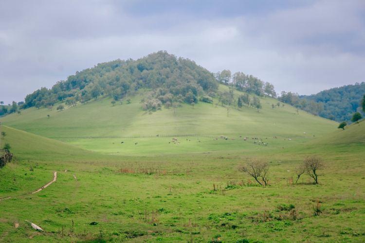 關山草原2