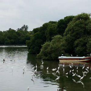 尼甘布泻湖旅游景点攻略图