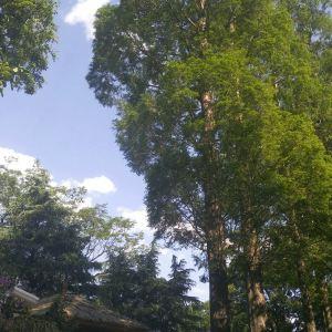 玉洱园旅游景点攻略图