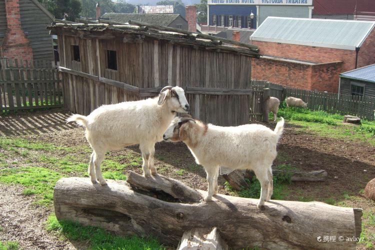 衝浪山羊農場