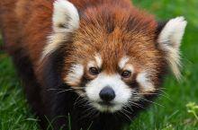 动物俱乐部 【属于孩子的世界】   孩子们天生就喜欢小动物。他们天生对动物充满了浓厚的兴趣,也非常愿