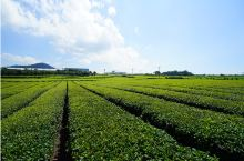 与济州绿茶地的邂逅#济州岛旅游##韩国旅游##韩国自由行##美食##咖啡店#