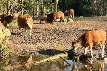 荷兰最好的皇家动物园  皇家动物园位于荷兰第二大城市鹿特丹的Ruhrangerk公园旁。两个入口距离