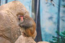 武汉旅游首选这个地方,景色绝美交通便捷,生活着很多珍稀动物