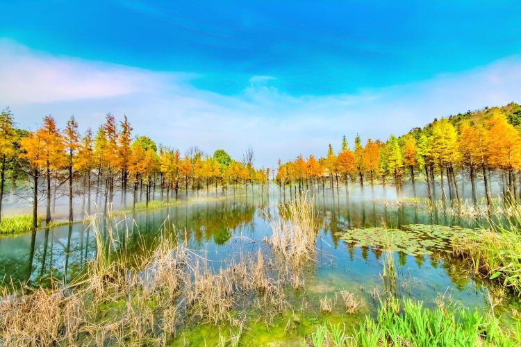Ginkgo Lake Park4