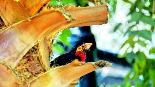 Montecasino Bird Sanctuary