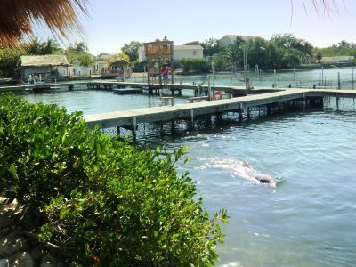 South Padre Island Dolphin Research & Sealife Nature Center