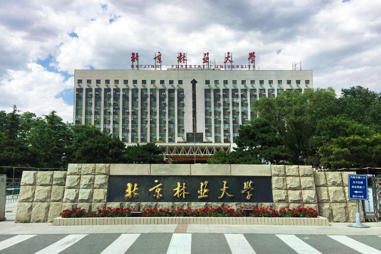 베이징임업대학