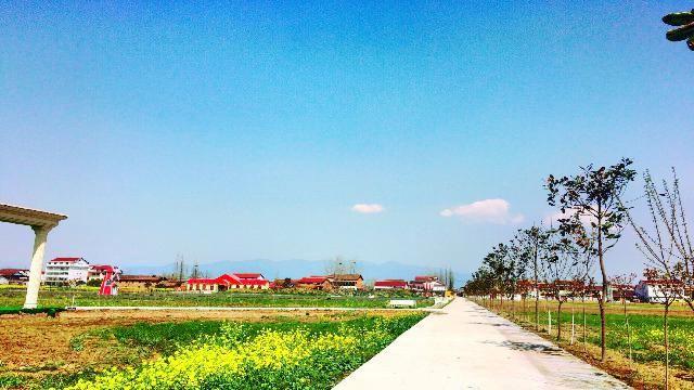 漢中薰衣草莊園