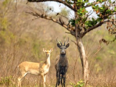 Datian Eld's Deer Reserve