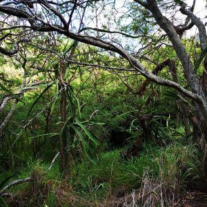 可可火山口植物园旅游景点攻略图
