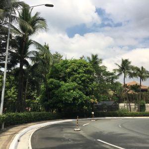 椰子宫旅游景点攻略图
