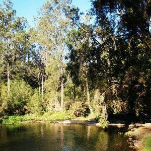 布里斯班森林公园旅游景点攻略图