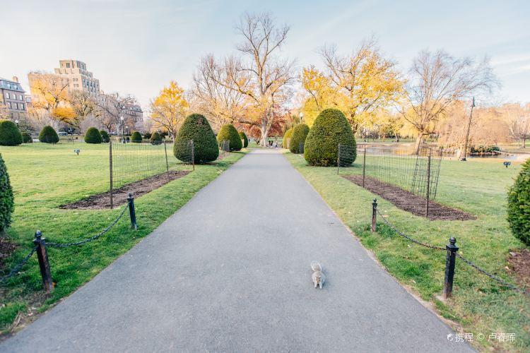 波士頓公共花園4