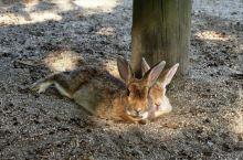 🐰岛的兔子们