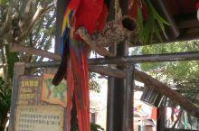 漂亮的金刚鹦鹉 在香港海洋公园拍摄的金刚鹦鹉