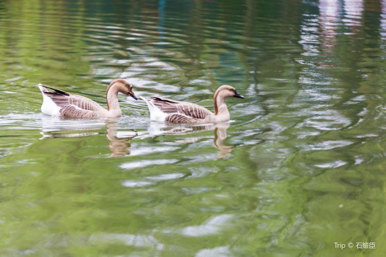 청두 동물원(성도 동물원)2