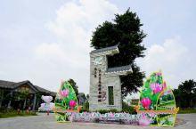 六月荷花香,到中国最美功夫水乡泛舟赏荷