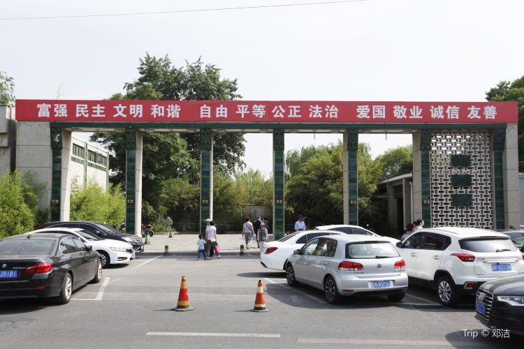 Purple Bamboo Park4