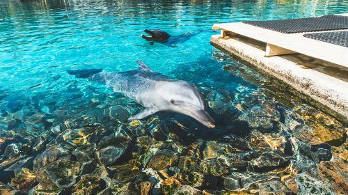 Gold Coast Sea World