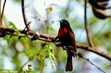 卡伦湖畔的鸟儿