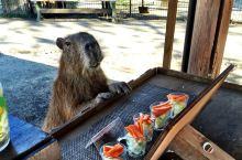 阿苏健康农场 可以玩两天的度假村